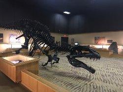 Dinosaur Discovery Gallery