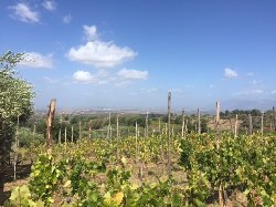 Minardi Frascati Winery