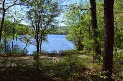 Houghton's Pond