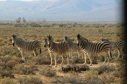 Inverdoorn Game Reserve Safaris