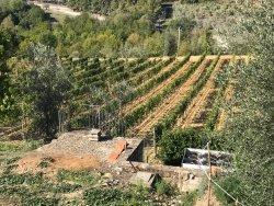Azienda Agricola Uccelliera