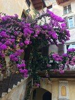 Borgo Alba chiara