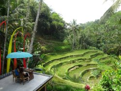Bali Natural Tours