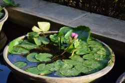 Lotus Pond Area