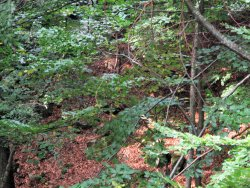 The Degeberga Trail