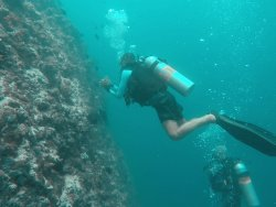 Euro Divers