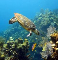 Underwater Paradise Glassbottom Boat - Tours