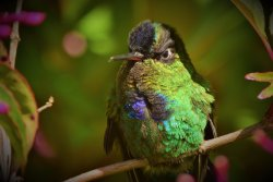 Costa Rica Nature Guides