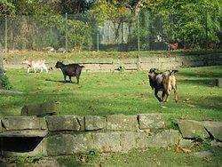 Fauna Park
