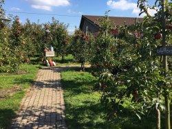 Appels plukken en appeltaart eten