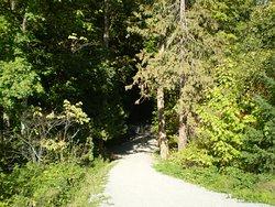 Byrne Creek Ravine Park