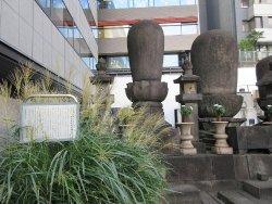 芝増上寺の御成門からほど近い場所にあるビルの裏手に、歴代の増上寺の大僧正のお墓が立ち並ぶ一角があります。