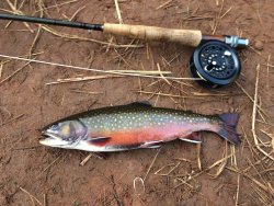 Fly King Fishing Guide