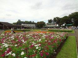 Kawaguchi Green Center