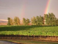 Beautiful Syrahs with Rainbow