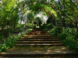 The Foxglove Spires Gardens
