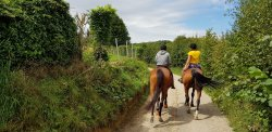 Activité balade à cheval