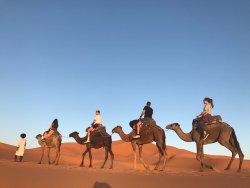 Sahara Camel Trips