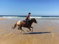 Contis Equitation