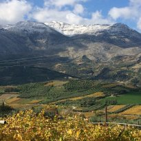 Diamantakis Winery