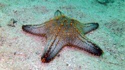 Marine Life Dibba