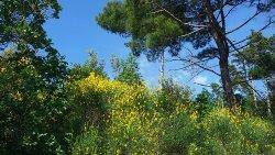 Sentiero Tiziana Weiss (o Sentiero Della Salvia)