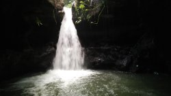 Burung Walet Waterfall