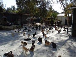 Malcolm Cat Sanctuary