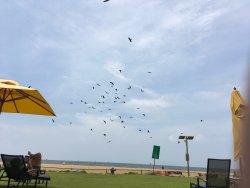 Der Strand vorm Heritance Negombo