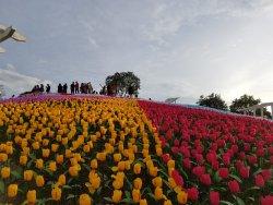 Jardin Necitas
