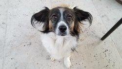 Princess, the friendly hotel dog