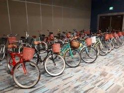 Playarida Bike Rentals