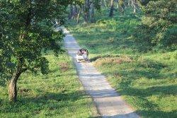 Gorumara Forest