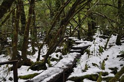 Creepy Crawly Nature Trail