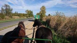 Pferdewagenfahrten Vinzenz Gangl Private Tours