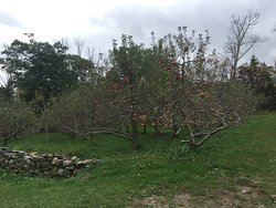 Wightman Fruit Farm