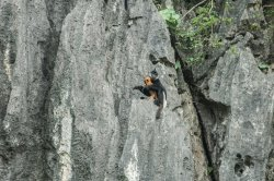 Vietnam Endangered Species Tour, the best primate tour in Vietnam