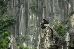 Vietnam Endangered Species Tour. Tour by naturalist in Vietnam