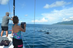 Enjoy watching dolphins swimming along with you
