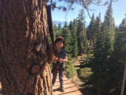 Tahoe Vista Treetop
