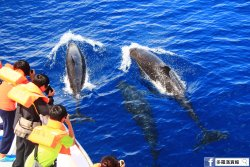 Dolphin and Whale Watching-Turumoan Company