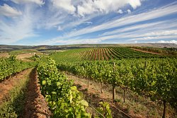 Oneiric Wines
