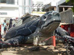 Bali Sea Turtle Society (BSTS)