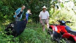 Kuranda Rainforest Journeys