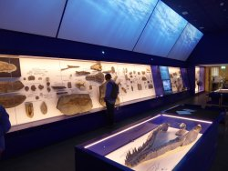 The Etches Collection, Museum of Jurassic Marine Life