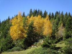 Herrlicher Herbstwald an der Strasse zur Grossen Scheidegg zwischen Oberem und Unterem Lauchbühl (285659365)