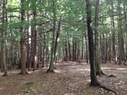This is a view within the campgrounds. You have access to the woods and the beach!!!