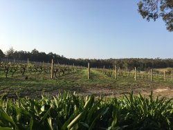 Firetail Wines