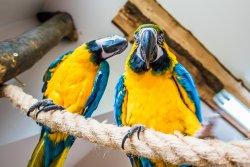 Papugarnia Egzotyczne Zakopane