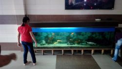 A view of the aquarium from the reception